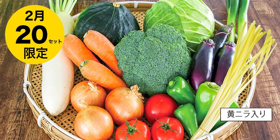 野菜のカゴ盛り写真
